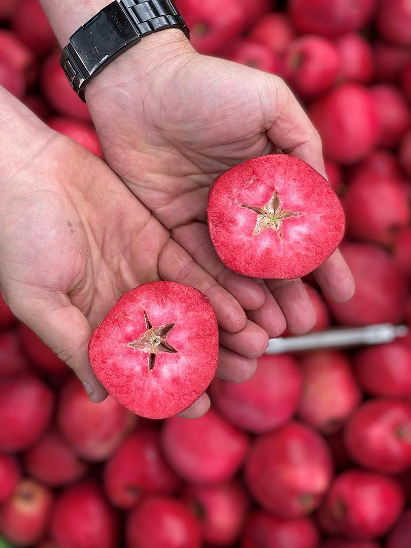 Intérieur de la pomme Red Love