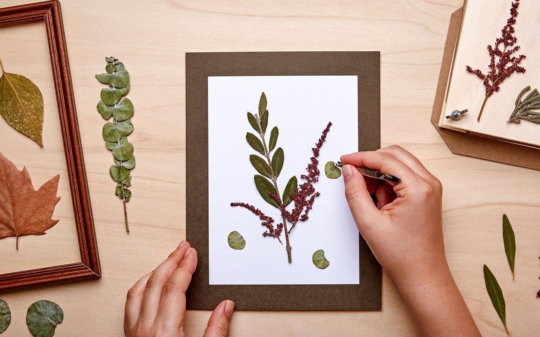 herbier d'automne